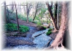 Myoon stream