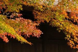 平林寺紅葉の画像
