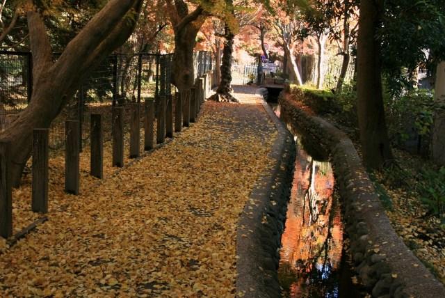 平林寺堀の落ち葉