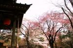 4月2日撮影 平林寺